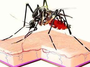 """<p><span style=""""background-color: transparent; color: rgb(0, 0, 0);"""">कोलकाता के कई दक्षिणी इलाके और पश्चिम बंगाल में डेंगू के मामले बढ़ते ही जा रहे हैं. कोलकाता की सरकार डेंगू के मामलों पर काबू करने में पूरी तरह से विफल साबित हो रही है. सरकारी अस्पतालों में डेंगू के मरीजों की संख्या दिन पर दिन बढ़ते ही जा रही है. डेंगू के करीब 44852 मामले सामने आए हैं, इतने अधिक संख्या में मामले सामने आने से ऐसा लगता है कि दिल्ली की तरह कोलकाता में भी डेंगू के मामले बहुत अधिक बढ़ रहे हैं. डेंगू कैसे प्रभावित जिलों में दक्षिण 24 परगना, हावड़ा और हुगली भी शामिल है. </span></p><p><br></p><p><span style=""""background-color: transparent; color: rgb(0, 0, 0);""""><span class=""""ql-cursor""""></span>सरकार की एक जानकारी के मुताबिक कोलकाता में डेंगू के करीब 25 से भी ज्यादा लोगों की मृत्यु हो चुकी है. पश्चिम बंगाल के मुख्य सचिव राजीव सिन्हा ने अपनी रिपोर्ट पेश की है राजेश सिन्हा के द्वारा पेश की गई रिपोर्ट में दावा किया गया है कि पश्चिम बंगाल में कुल 44852 मामले डेंगू के दर्ज किए गए हैं.&nbsp; इस रिपोर्ट में दावा किया गया है कि पिछले दो हफ्तों से डेंगू मामलों में बहुत वृद्धि हुई है.रिपोर्ट में कहा गया कि बनगांव नगरपालिका क्षेत्र, गाइघाटा, हाबरा आई ब्लॉक और उत्तरी 24 परगना जिले के बैरकपुर नगरपालिका क्षेत्र, फालता, मोगराहाट 1 और 2 प्रखंड, मथुरापुर 1 और 2 प्रखंड, दक्षिणी 24 परगना जिले का भनगोर आई प्रखंड भी इस बीमारी से प्रभावित हुआ।</span></p><p><br></p><p><br></p>"""