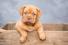 <p>The incident is of Vasai when some housing society members complaint about puppies making noise and disturbing them. Two members and the watchman took the puppies away and thrown them in a ditch.</p><p>According to the local animal rights activist mitesh Jain, the local feeder Vanessa Vaz complaint about the puppies being missing when she went to feed them. The incident is of Niharika Apartment, Vasai West.</p><p>Mitesh Jain then went along with his advocate in the society and checked for the CCTV footages, It was found that the watchman was separating the mother from her puppies by pelting stones and then took them in a carriage of his bicycle. It all happend at around 11 PM at night.</p><p>The animal right activist asked the watchman and other two members about the incident and they confessed everything. The puppies were searched by Vanessa and the activist, they found the puppies and reunited them with their mother.</p><p>The case as been lodged on the three accused under section 428 of the Prevention of Cruelty to Animals Act.</p><p><br></p>