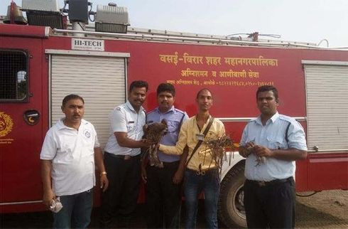 """<p><span style=""""background-color: transparent; color: rgb(0, 0, 0);"""">Recently in the Global City of Virar West, the fire brigade official along with an animal welfare officer was seen rescuing an injured pigeon along with an eagle as both of them got trapped in a net on Tuesday.&nbsp;As per Mitesh Jain, an Animal Welfare officer, he was informed initially about the same and he called the fire brigade and instantly ran towards the spot.&nbsp; Both the birds were seen struggling to set themselves free and were flapping their wings rapidly. This resulted in their wings being entangled in the net and hence both the birds got injured. After the birds got rescued, they were taken to a welfare center that was situated in Goregoan.&nbsp;As per the details given by Mitesh Jain, there are several other birds in that area who visit the fields and amateur traps with nets are laid by the hunters to capture these birds and often these birds fell into these traps.</span></p>"""