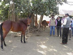 <p>A complaint was filed by a businessman against three unidentified persons. The businessman is the resident of Navrangapura and in his complaint, he stated that he and his wife were beaten by a horse rider over a money dispute. He took the horse ride for his children at Law garden.</p><p>The businessman Arpit who has cloth shop at Kalupur had taken his family to the Law garden on Friday, His two children's Shiya and Varin urged him to give them a horse ride at Law garden which is a big tourist attraction. The dispute started when the horse owner mentioned that the price of one ride is 100 Rs, arpit insisted that the real rate is only Rs 30.&nbsp;</p><p>The argument soon turned violent and the horse owner started beating the businessman, The owner also used abusive words and kicked him. When his wife intervenes, she was beaten up as well.</p><p>The police inspector stated that the horse owner lives in Gulbai Tekra and is wanted, they soon will be checking the CCTV footage and will arrest the culprit.</p>