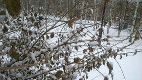 """<p>Ну вот наконец и свершилось! Природа подарившая нам настоящее чудо в виде целого месяца """"Бабьего лета"""" понежившись на солнышке, наконец-то проснулась! Вчера в нашем городе выпал первый снег! Зима берет власть в свои руки! Зима у нас долгая и холодная! Но не беда! Местное население давно к ней привыкло! И в зиме можно найти свои прелести и удовольствия! Свои развлечения! Санки! Лыжи! Коньки! Снежки и снежинки на окнах! Елка на Новый год! Рождество! Дед Мороз! И куча подарков! Шампанское!</p><p>И конечно салат """"Оливье"""" и """"Селедка под шубой""""!</p><p><br></p>"""