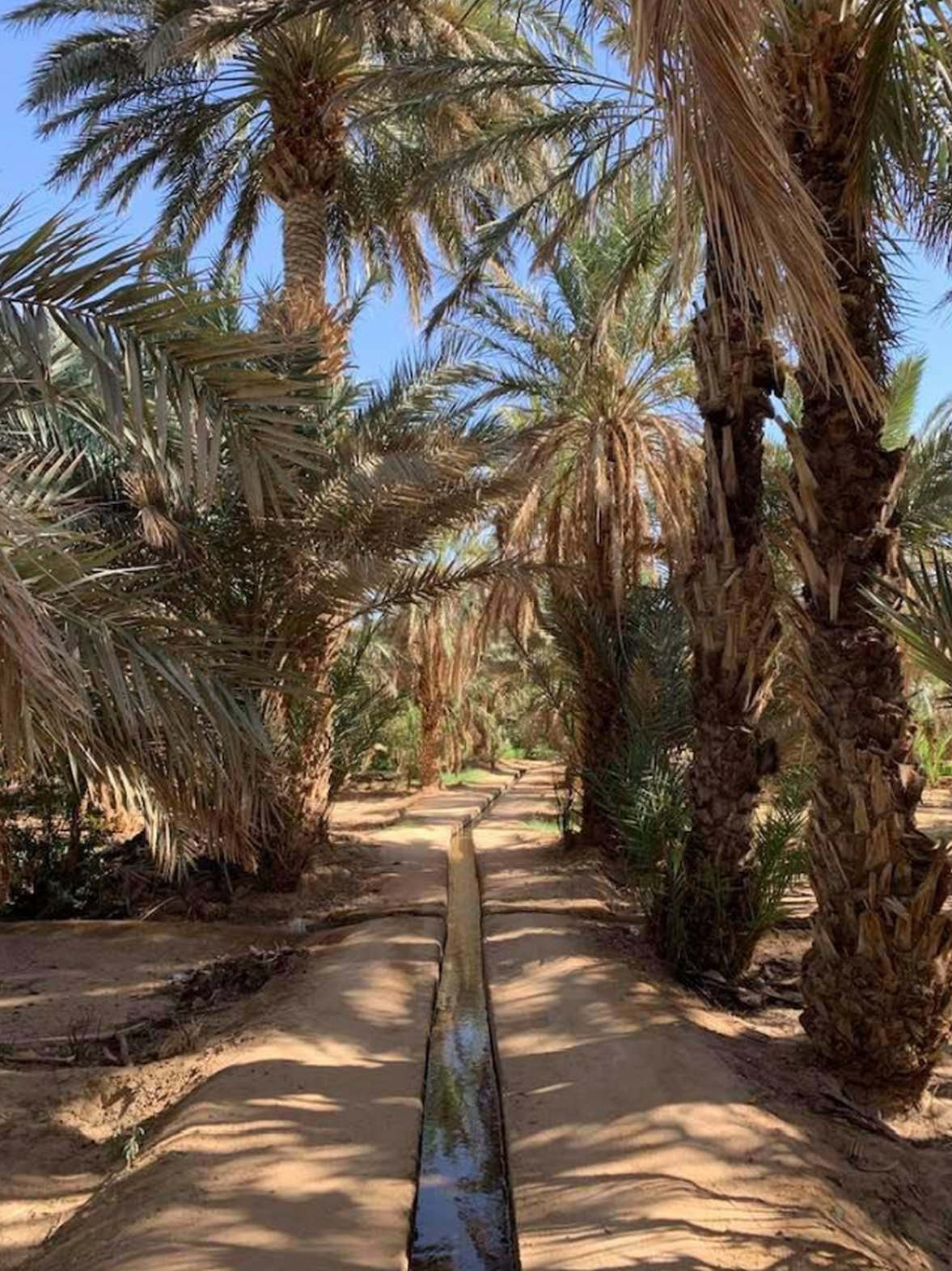 """<p><strong style=""""color: rgb(161, 0, 0);""""><em>Wonderful place! The desert is beautiful, the views are amazing! We stayed not in the Merzoug itself, but in a small oasis nearby. The oasis itself is very interesting. It seems to me there is no need to take an additional tour. We independently went to the flamingo lake, the flamingos were there. We climbed the dune to sunset and sunrise, walked around the oasis. I recommend going out into the desert in the morning and in the evening, in the afternoon a lot of ATVs ride and crush the impression.</em></strong></p>"""