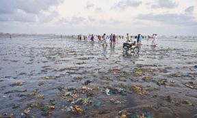 """<p><span style=""""color: black;"""">PLASTIC&nbsp;</span>is&nbsp;not&nbsp;the&nbsp;only&nbsp;issue&nbsp;facing&nbsp;us&nbsp;along&nbsp;our&nbsp;coastline;&nbsp;it&nbsp;is&nbsp;also&nbsp;the&nbsp;industrial&nbsp;sewage&nbsp;and&nbsp;untreated&nbsp;wastewater.&nbsp;Nearly&nbsp;500&nbsp;MGD&nbsp;of&nbsp;untreated&nbsp;effluent&nbsp;is&nbsp;estimated&nbsp;to&nbsp;be&nbsp;released&nbsp;into&nbsp;the&nbsp;Arab&nbsp;Sea.</p><p><span style=""""color: black;"""">The Karachi Port is adding a shameful 275 MGDs, Karachi's Lyari River another 100 MGDs, although recent figures have also shown that Defense Housing Authority is dumping 136 MGDs; the rest comes from other tributaries like Nehr-i-Khayam, Malir River, and the Korangi Industrial Zone.</span></p><p><span style=""""color: black;"""">This has resulted in an unprecedented 40% fall in populations of marine life. A recent study Exploring Sustainable Solution For Wastewater Treatment: A Lyari River case concluded that the untreated effluent of the river contains toxic amounts of metal; these include nickel and chromium. Four decades ago; fishermen and migratory birds were home to the Lyari River.</span></p><p><span style=""""color: black;"""">Our ecosystem is adversely affected by industrial waste entering creeks and mangroves are dying as water is poisonous. Marine life such as shrimps is becoming polluted while the already small numbers of flamingos are going to continue to decline. Fish are also mostly polluted in our few remaining mangroves.</span></p>"""