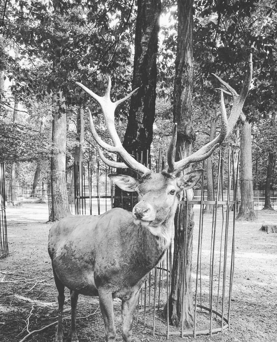krakw_zoo_w_krakowie_poland750_16_08_2019