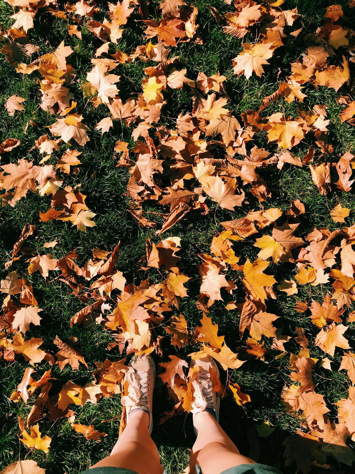 """<p>Polska złota jesień nazywana jest potocznie """"babim latem"""". To okres słonecznej pogody i dosyć wysokiej temperatury we wrześniu oraz październiku. W tym roku pogoda nas rozpieszcza.</p>"""