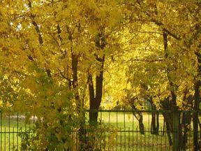 <p>Осень, как волшебная сказка, которая пришла к нам неожиданно. Совсем недавно деревья были одеты в зеленые одежды, и солнце согревало землю своими лучами. И каждый солнечный день воспринимался всеми, как праздник.</p><p><br></p><p>Но было бы так желаемо лето, если бы оно продолжалось круглый год? Скорее всего, люди разделятся приблизительно на равное количество: на тех кто любит лето, тех кто любит зиму, осень или весну.</p><p><br></p><p>Если бы люди научились принимать и любить каждый день таким какой он есть, мир стал бы действительно счастливым, ярким и красочным. </p><p><br></p>