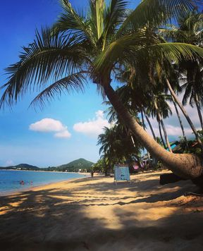 https://th.avalanches.com/surat_thani_beautiful_beach_at_the_hotel_palm_point_village_suratthani_thailand_956_05_09_2019