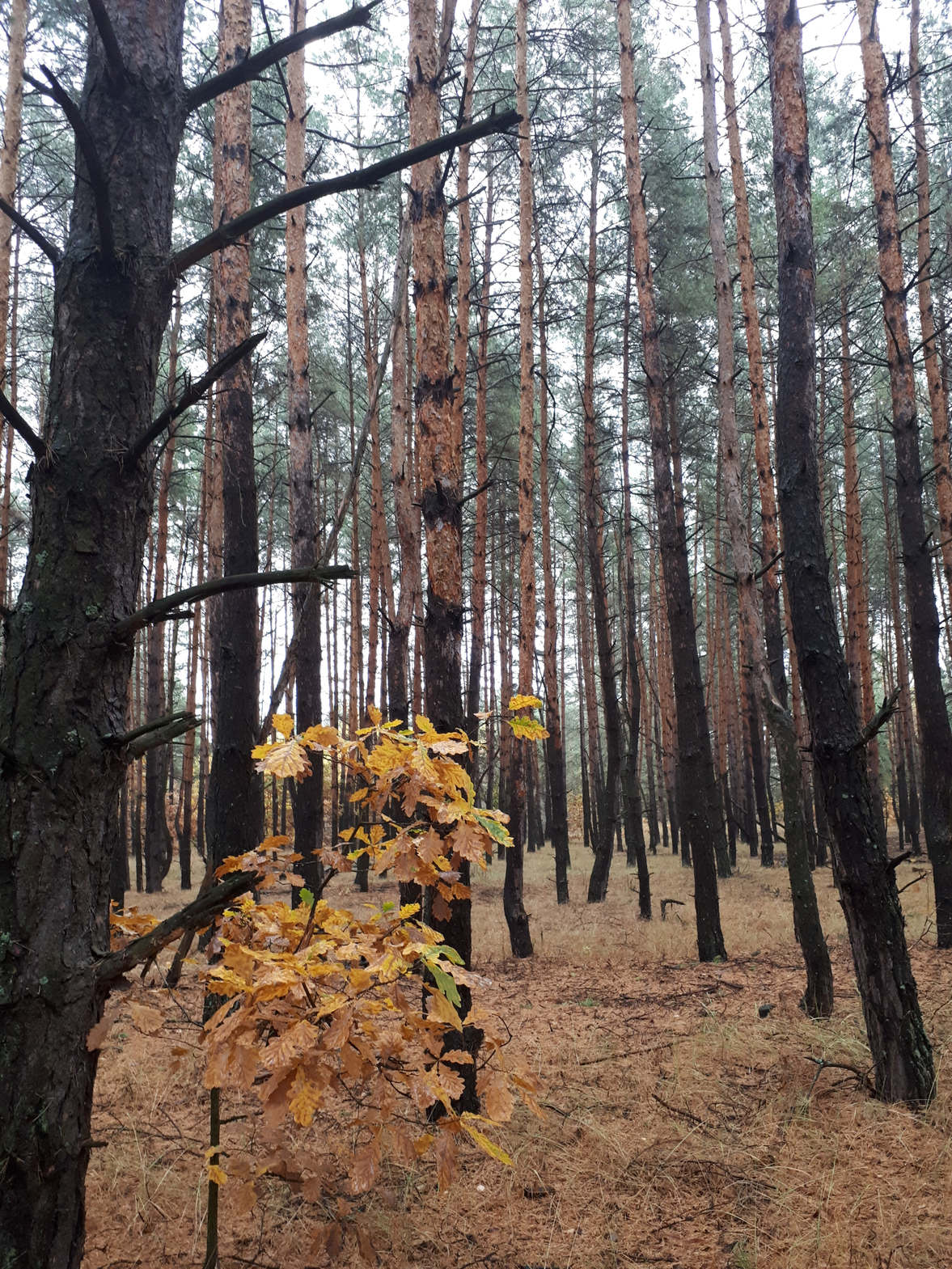 bilyky_osennyi_les4601_07_10_2019