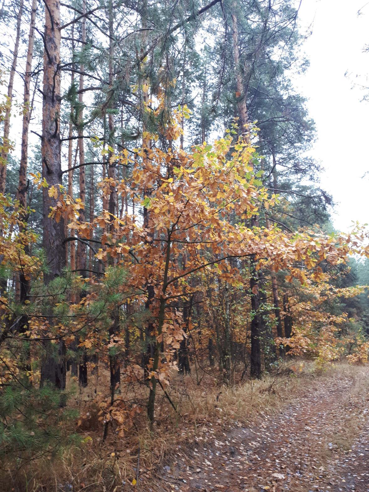 <p>Осенний лес красив, словно в сказке. Природа буйствует яркими, весёлыми красками. В воздухе пахнет грибами и последними осенними цветами.</p><p>Вокруг невероятная красота. Так и хочется наслаждаться этой тишиной и красотой.</p>