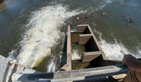 <p>The dispute over California's limited water supplies has plunged into a San Francisco courtroom after a lawsuit was filed this week, which claimed that the federal government's plan to slacken previous restraints on water deliveries to farmers is most likely a blueprint for wiping out fish.</p><p><br></p><p>Fishing groups and environmentalists sued the U.S. Fish and Wildlife Service and the National Marine Fisheries Service on Monday, claiming that they allegedly failed to protect steelhead trout, chinook salmon, and delta smelt.</p><p><br></p><p>These fishing groups and environmentalists believe that the full government proposal that provides the Central Valley farmers and Southern California cities more water is without a satisfactory explanation for the protections for the imperiled fish.</p><p><br></p><p>The lawsuit filed charges that the plans of the government to increase rural deliveries from the Sacramento-San Joaquin River Delta is an absolute and whimsical failure to support the Endangered Species Act.</p><p><br></p><p>The vast pumps that are used to bring delta water to irrigate 750,000 acres of cropland and 25 million Californians have been a subject of years of the legal quarrel between environmentalists, farmers, fishing interests, and water agencies across the state.</p><p><br></p><p>The environmentalists claim that the pumps suck up and kill a silver-colored endangered fish that is uniquely adapted to the delta's salty water and shifting currents.</p><p><br></p><p>&nbsp;</p><p>&nbsp;</p><p>&nbsp;</p>