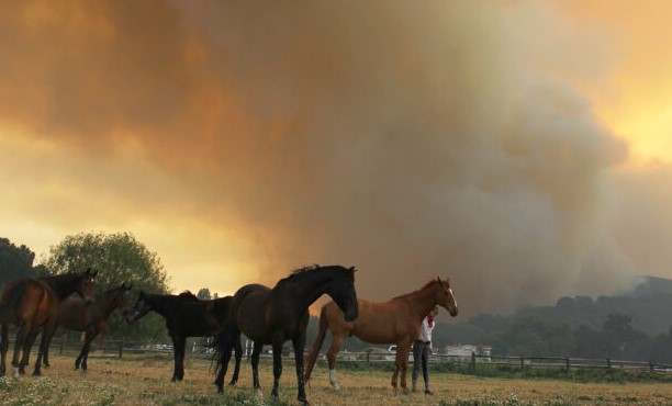 <p>A video has emerged in which a dark horse was seen running in the direction of flames to save mare and her colt. The Easy-Fire was started around 6:14 AM on Oct 30 in Simi Valley. Because of the hurricane-force winds, it has affected 1300 acred of land in just three hours. CBS Los Angeles captured the video footage shows locals trying to save horses and transporting them to a safer location. Many good Samaritans helped the horse owners and saved them. Lucy Ruiz, who is an animal technician with Animal Services Department, said that they are going to keep their Hansen Dam center open if anyone needs their help. Peggy Lane of Reseda noted in her statement that the situation is not okay in Simi Valley. She has helped in the rescue efforts.</p><p><br></p><p><br></p>