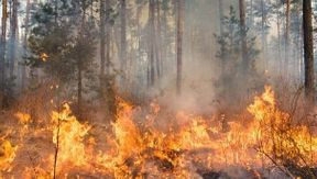 <p>The state's largest utility PG&amp;E says it is searching for innovative ways of preventing disasters in the future after it accepts the responsibility for setting off California's most destructive and deadliest wildfire ever.</p><p><br></p><p>State regulators released a new report detailing how PG&amp;E neglected to properly examine and maintain the equipment, which lead to the ignition os the November 2018 Camp Fire. This wildfire killed 85 people and destroyed 18,804 structures leaving the Northern California town of Paradise wholly devastated.&nbsp;</p><p><br></p><p>A California Public Utilities Commission investigated the events that led to a catastrophic fire and found that the company broke 12 state safety rules, which regulators considered not a rare instance but a clear sign of an overall pattern of incompetent maintenance and inspection of PG&amp;E's transmission facilities.</p><p><br></p><p>Amongst the violations, the utility also ignored to conduct detailed climbing examinations that could have discovered the equipment failure, which finally ignited the fire and also failed to prioritize a safety hazard accurately.</p><p><br></p><p>The reports also said the aging tower from which a wasted hook broke and finally ignited the fire had not undergone a climbing inspection since at least 2001.</p><p><br></p><p>&nbsp;</p><p>&nbsp;</p><p>&nbsp;</p><p>&nbsp;</p>