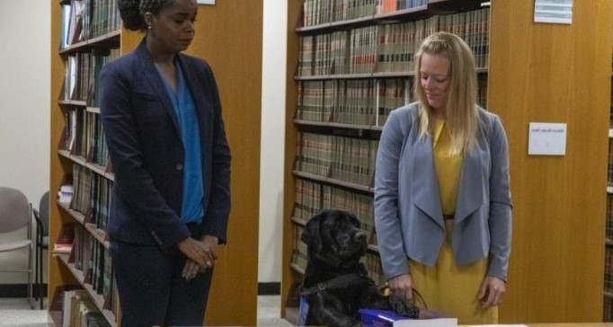 <p>The Chicago State Attorney's office has a new member who will help the employees by providing emotional support. Hatty, who is a young and energetic Labrador, is the latest member of the house. It was an emotional movement for all the employees when Hatty joined the team and was sworn in at the office. The 2-year-old will be on the same 9-to-6 human schedule, but the job will be entirely different. She will be there roaming around and provide emotional support to everyone who needs a hug or someone to play with. The main aim is to ease the stress of the criminal proceedings on young children, and those who have mental health issued. Hatty will handle up to 200 cases every year. She was partly trained by the inmates and will be the first emotional support provider at the office.</p><p>&nbsp;</p><p>&nbsp;</p><p>&nbsp;</p>