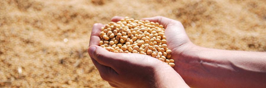 grão colheita imagem destaque piqsels