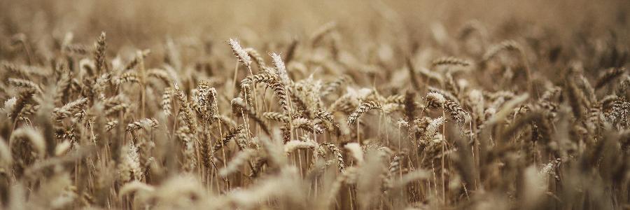 BRF rastreamento de grãos investimento