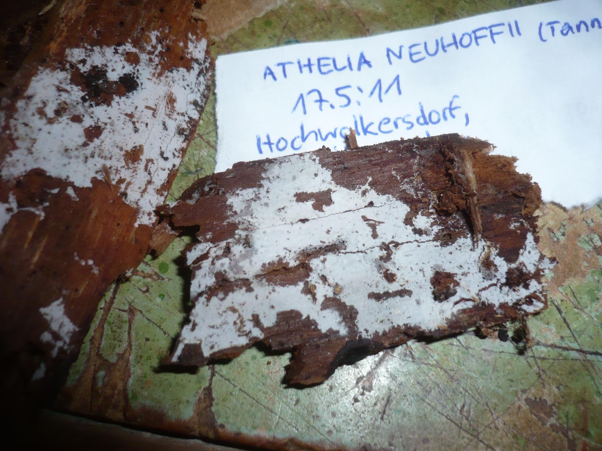 Athelia image