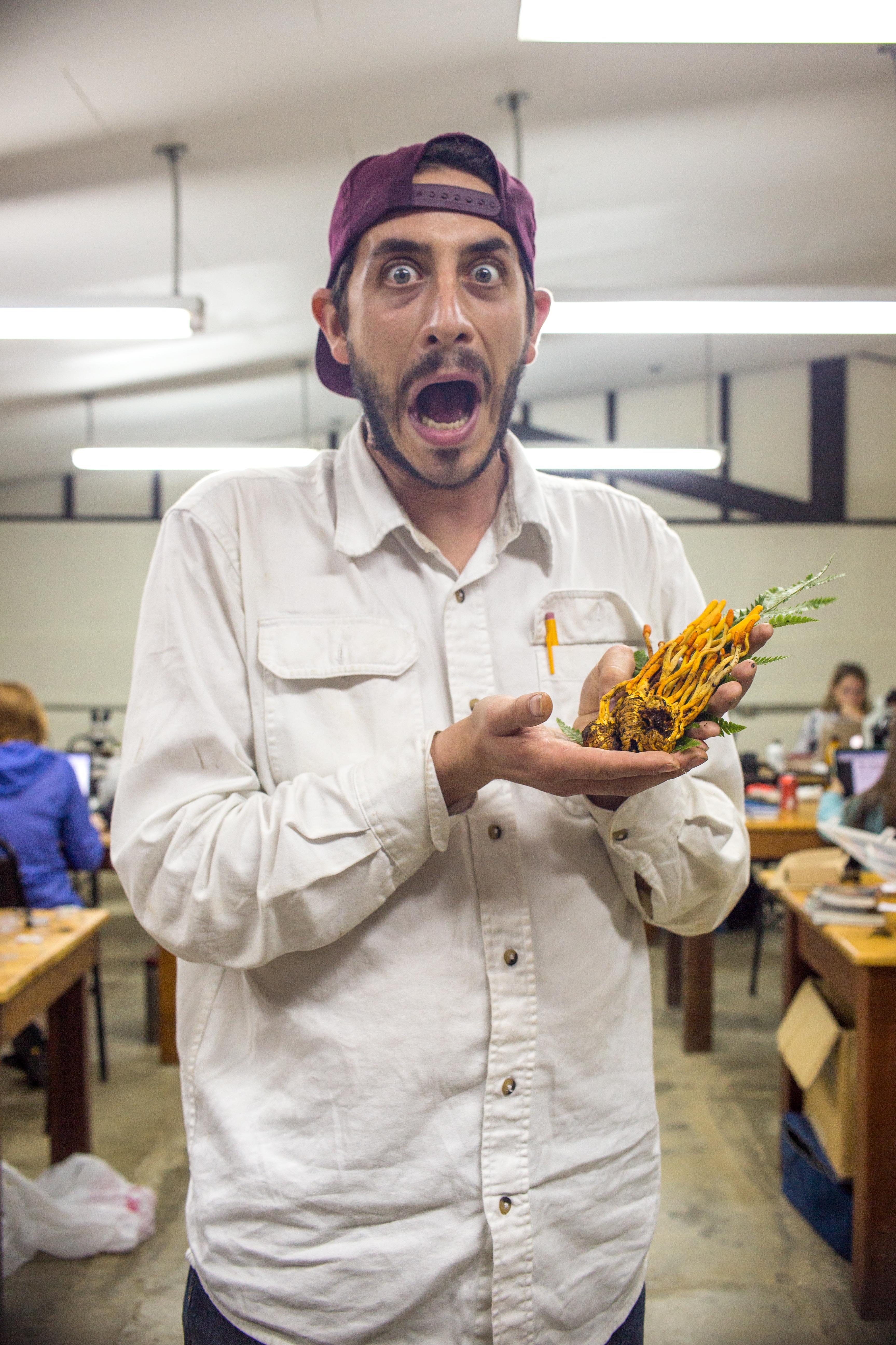 Cordyceps melolonthae image