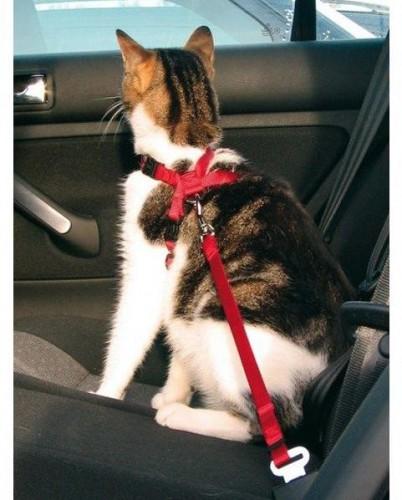 Ostatné potreby pre mačky
