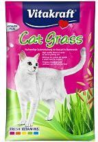 Zdravie a kondícia mačiek