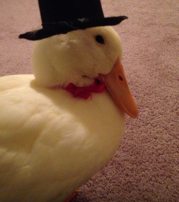 A picture of a white duck wearing a bow tie and a small hat.