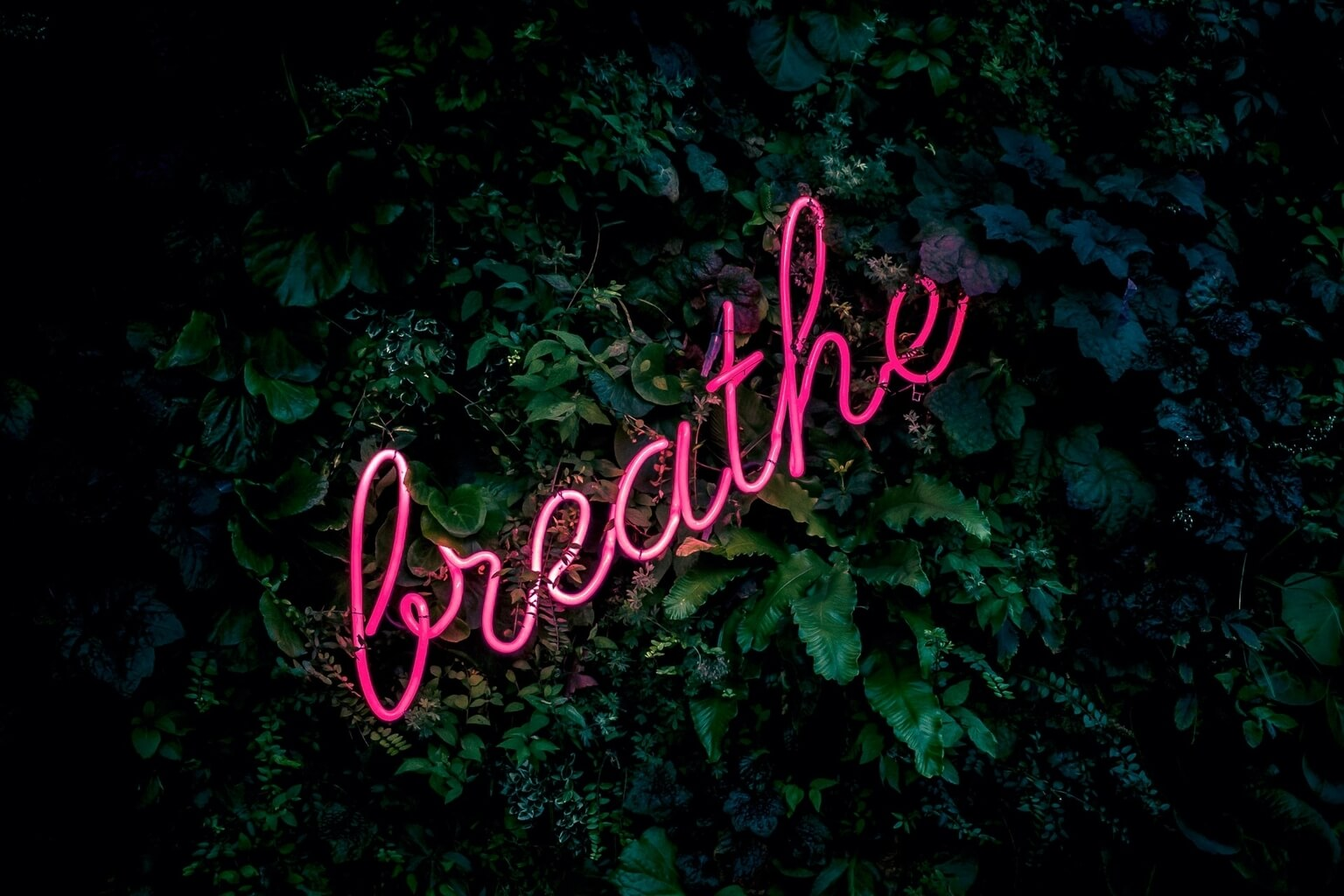 A picture of the top of a green bush at night. On top of the bush is a pink neon sign that spells Breathe in cursive letters.