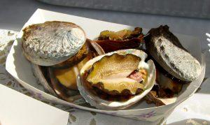 abalone soup, abalone animals, sea animals