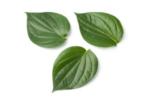 health benefits betel leaves
