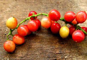 BIGNAY FRUITS BENEFITS