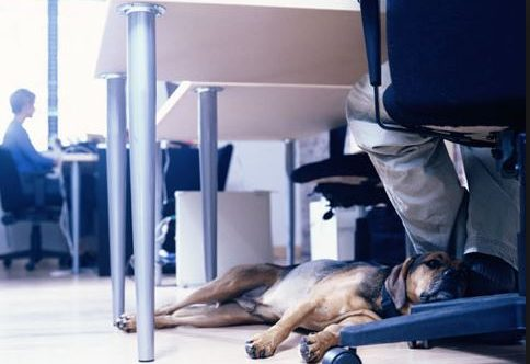 Can you bring your pet to work?