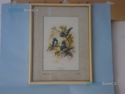 N. 6 quadri - 4 con paesaggio e 2 con uccellini.