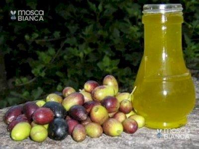 Extravergine d'oliva genuino del Cilento