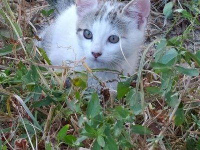 Gattini dolci e giocherelloni