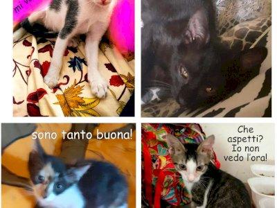 Gattini in adozione gratuita