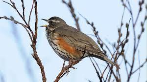 Konenäkö lintujen tunnistuksessa - nuorten luontosuhteen vahvistaminen