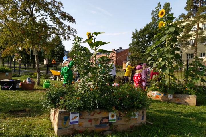 Oman puutarhan sadon hyödyntäminen osana ruokakasvatusta varhaiskasvatuksessa, Upseerin päiväkodissa