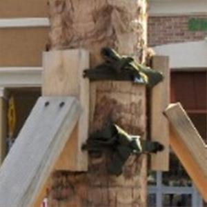 ArborBrace Palm Braces (aka Palm Battens, Palm Brace, Palm Staking) / ARB-PBK-S
