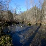Photograph of Upper Coquitlam River Park.