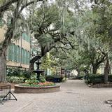 Photograph of College of Charleston.