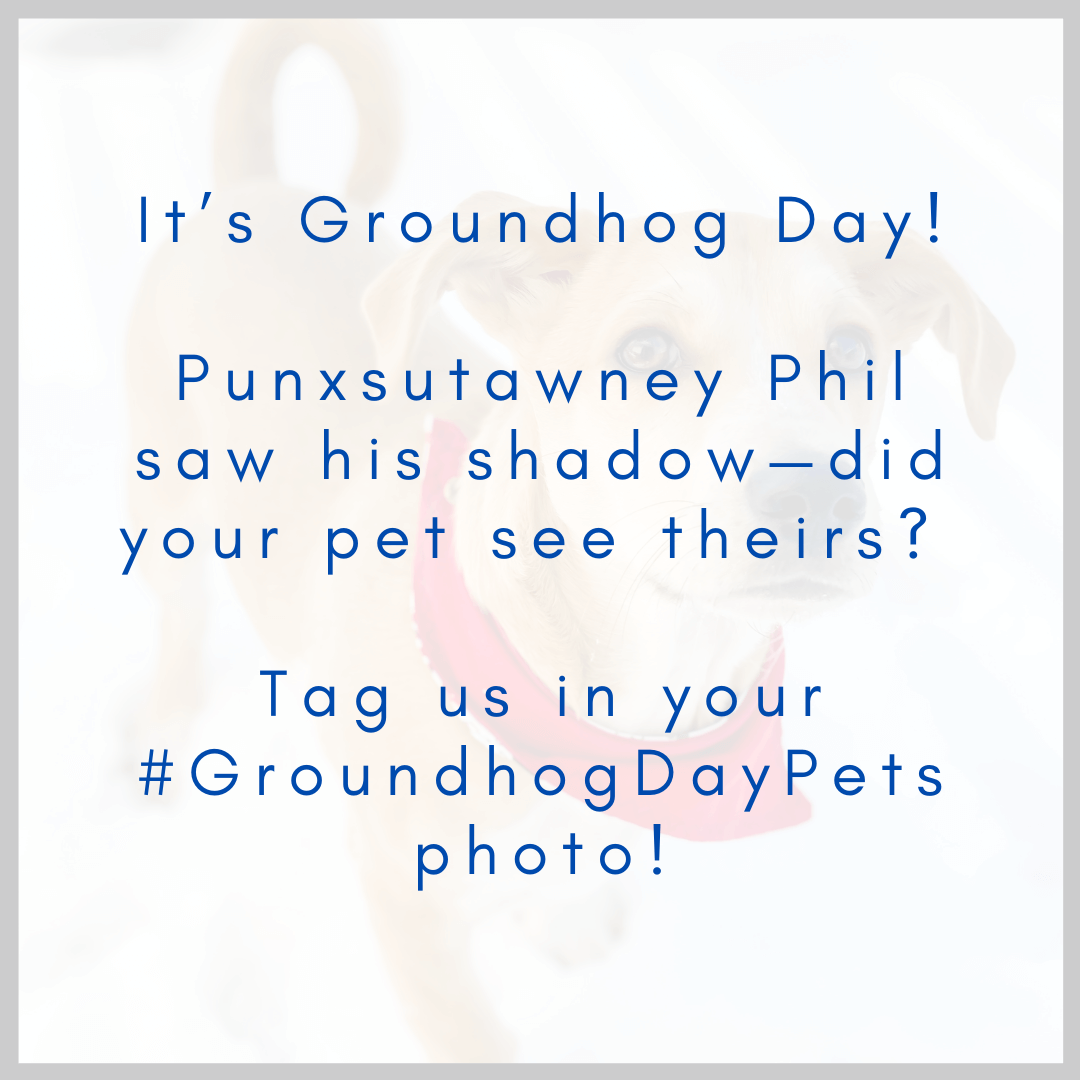 Example of a Groundhog Day social media post.