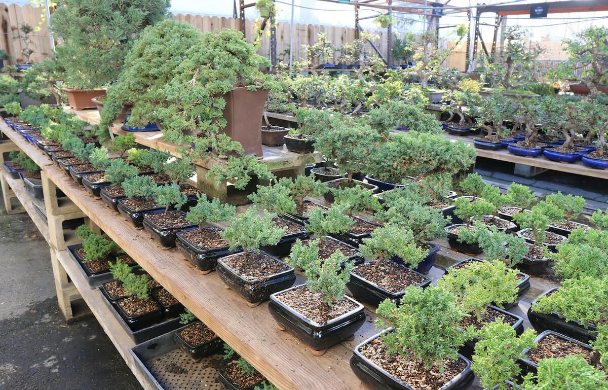 Eastern Leaf's greenhouse.