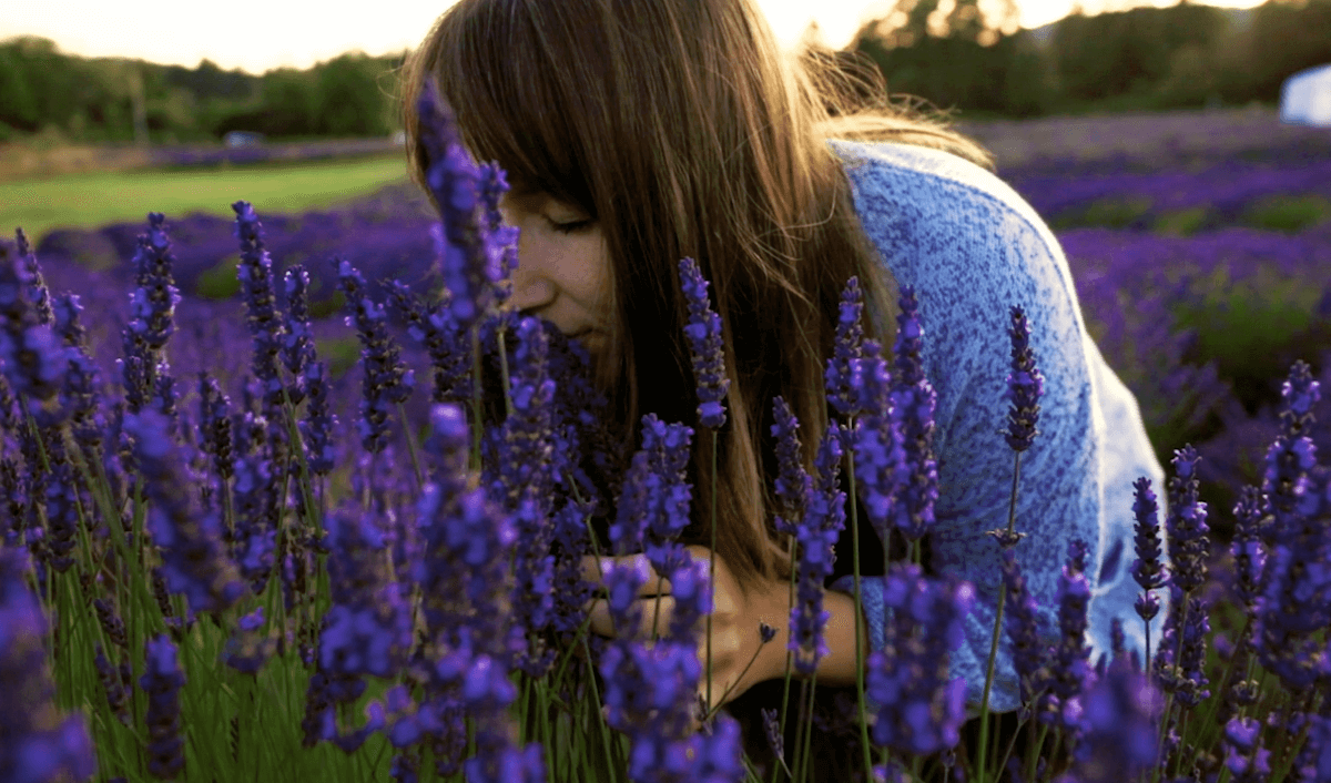 The Pelindaba Lavender Farm.