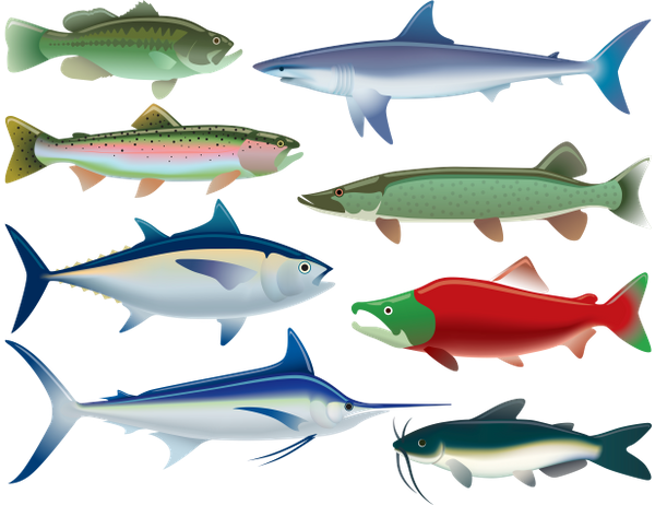 рыба, тунец, морской окунь, горбуша, голубой марлин, сом, акула, красная рыба, морепродукты, морские обитатели, морские рыбы, морская фауна, морские животные, fish, tuna, sea bass, pink salmon, catfish, blue marlin, shark, red fish, seafood, marine life, sea fish, marine fauna, marine animals, fisch, thunfisch, wolfsbarsch, rosa lachs, wels, blauer marlin, hai, roter fisch, meeresfrüchte, meereslebewesen, seefisch, meeresfauna, meerestiere, poisson, thon, bar, saumon rose, poisson-chat, makaire bleu, requin, poisson rouge, fruits de mer, vie marine, poisson de mer, faune marine, animaux marins, pescado, atún, lubina, salmón rosado, bagre, aguja azul, tiburón, pez rojo, mariscos, vida marina, peces de mar, animales marinos, pesce, tonno, branzino, salmone rosa, pesce gatto, marlin azzurro, squalo, pesce rosso, frutti di mare, vita marina, pesce di mare, fauna marina, animali marini, peixe, atum, robalo, salmão rosa, peixe-gato, marlin azul, tubarão, peixe vermelho, frutos do mar, vida marinha, peixe do mar, fauna marinha, animais marinhos, риба, тунець, морський окунь, блакитний марлин, червона риба, морепродукти, морські мешканці, морські риби, морська фауна, морські тварини