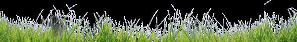 лужайка, зеленая трава, зеленое растение, green grass, green plant, grünes gras, grünpflanze, herbe verte, plante verte, hierba verde, erba verde, pianta verde, grama verde, planta verde