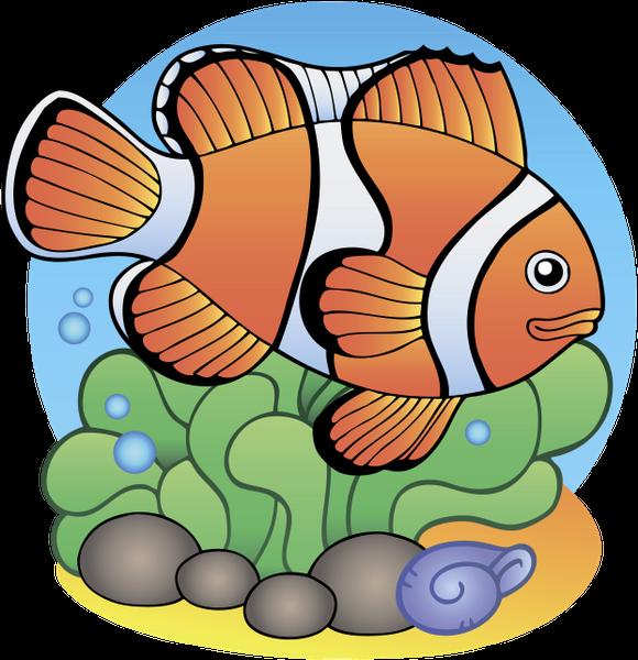 рыба, рыба клоун, морские обитатели, морские рыбы, морская фауна, морские животные, fish, marine fish, marine life, marine animals, fisch, meeresfische, meereslebewesen, meerestiere, poisson, poisson marin, vie marine, animaux marins, peces, peces marinos, vida marina, animales marinos, pesce, pesci marini, vita marina, animali marini, peixe, peixes marinhos, vida marinha, animais marinhos, риба, морські мешканці, морські риби, морська фауна, морські тварини