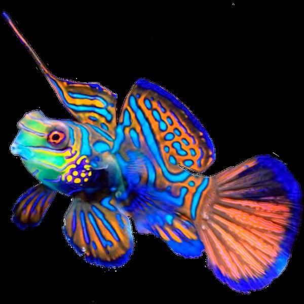 рыба попугай, разноцветная рыба, коралловый атолл, океаническая рыба, морская рыба, parrot fish, colorful fish, coral atoll, ocean fish, saltwater fish, papageienfische, bunte fische, korallen-atoll, meeresfische, seefische, poissons perroquets, poissons colorés, atoll de corail, les poissons de mer, poissons d'eau salée, peces loro, peces de colores, atolón de coral, peces marinos, peces de agua salada, pesci pappagallo, pesci colorati, atollo di corallo, pesci oceano, pesce di mare, peixes-papagaio, peixes coloridos, atol de coral, peixes do oceano, peixes de água salgada