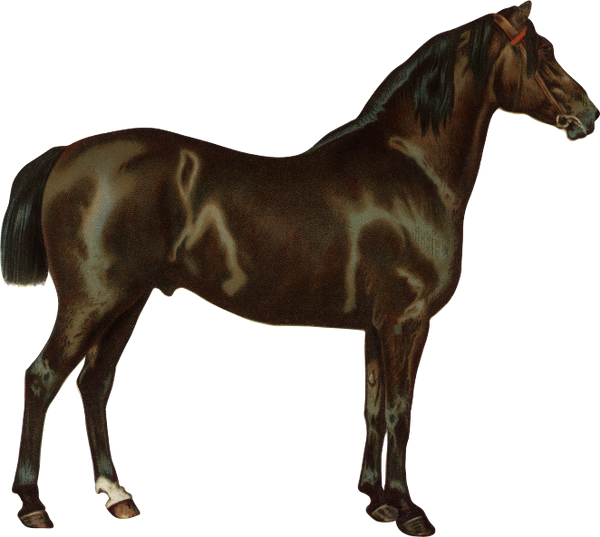 конь, скаковая лошадь, парнокопытные, horse, racehorse, artiodactyls, pferd, rennpferd, paarhufern, cheval, cheval de course, artiodactyles, caballo, caballo de carreras, cavallo, cavallo da corsa, artiodattili, cavalo, cavalo de corrida, artiodáctilos