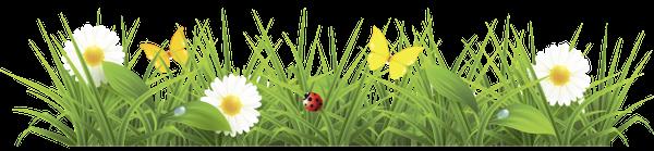 ромашка, ромашковое поле, трава, ромашка луговая, полевые цветы, божья коровка, бабочка, chamomile, chamomile field, grass, chamomile meadow, wildflowers, ladybug, butterfly, kamille, kamille feld, gras, kamille wiese, wildblumen, marienkäfer, schmetterling, camomille, champ de camomille, herbe, camomille pré, fleurs sauvages, coccinelle, papillon, manzanilla, campo de la manzanilla, hierba, manzanilla pradera, mariquita, mariposa, camomilla, campo di camomilla, erba, prato di camomilla, fiori di campo, coccinella, farfalla, camomila, campo de camomila, grama, prado de camomila, flores silvestres, joaninha, borboleta, ромашкове поле, ромашка лугова, польові квіти, сонечко, метелик