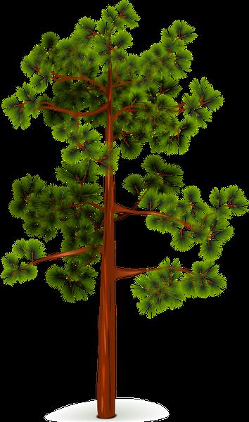 сосна, зеленое растение, хвоя, дерево, kiefer, grüne pflanze, nadeln, baum, pin, plante verte, aiguilles, arbre, agujas, árbol, pino, pianta verde, aghi, albero, pinheiro, planta verde, agulhas, árvore, зелена рослина