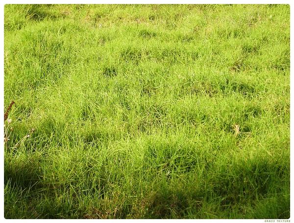 зеленая трава, texture nature, green grass, textur natur, grünes gras, nature texture, herbe verte, textura de la naturaleza, la hierba verde, tessitura natura, erba verde, textura natureza, grama verde, текстура природа, зелена трава, экология, екологія, ecology, ökologie, l'écologie, ecología, ecologia