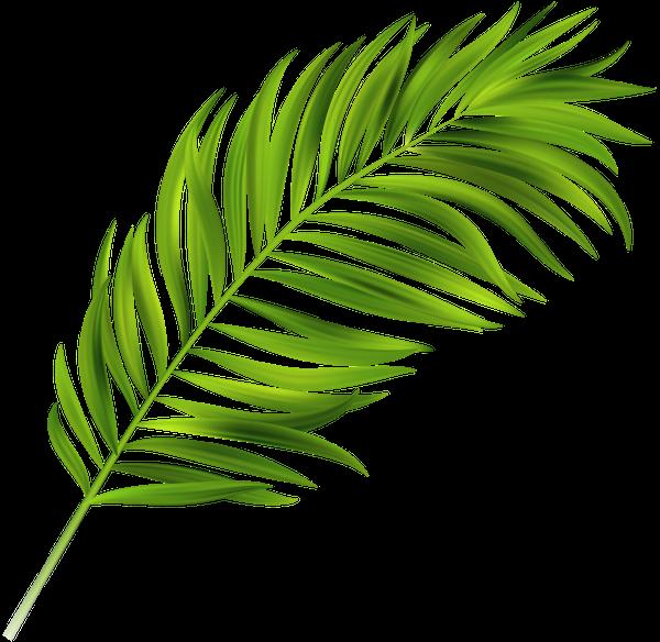 лист тропической пальмы, зеленый лист, пальмовый лист ...